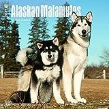 Cute Alaskan Malamute Calendar Dogs 2017 {jg} Best Holiday Gift Ideas - Great for mom, dad, sister, brother, grandparents, grandchildren, grandma, gay, lgbtq.