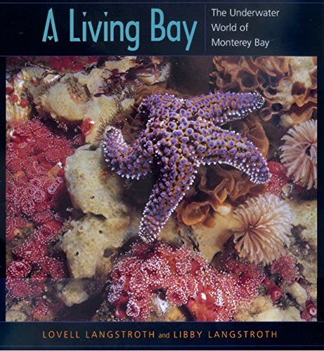 A Living Bay  The Underwater World Of Monterey Bay
