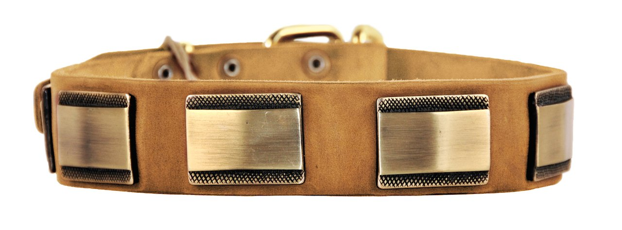 Dean and Tyler  BRASS STYLE , Leather Dog Collar with Solid Brass Buckle Tan Size 51cm by 4cm Fits Neck Size 46cmes to 56cmes.