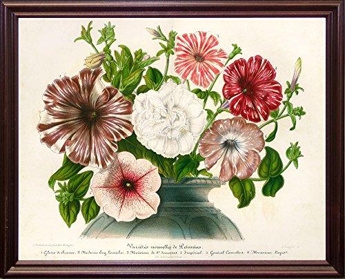 Frame USA Varietes Nouvelles de Petunias-PRIPUB130926 Print 19.75
