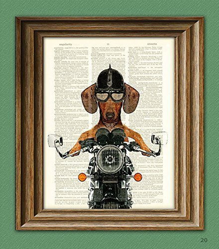 Dachshund Art Print Doxie Danger Motorcycle Stuntman dog illustration beautifully upcycled dictionary page book art (Dachshund Wall)