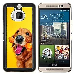 EJOOY---Cubierta de la caja de protección para la piel dura ** HTC One M9Plus M9+ M9 Plus ** --Oro perro del labrador retriever del chocolate