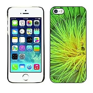 TopCaseStore / la caja del caucho duro de la cubierta de protección de la piel - Plant Nature Forrest Flower 105 - Apple iPhone 5 / 5S