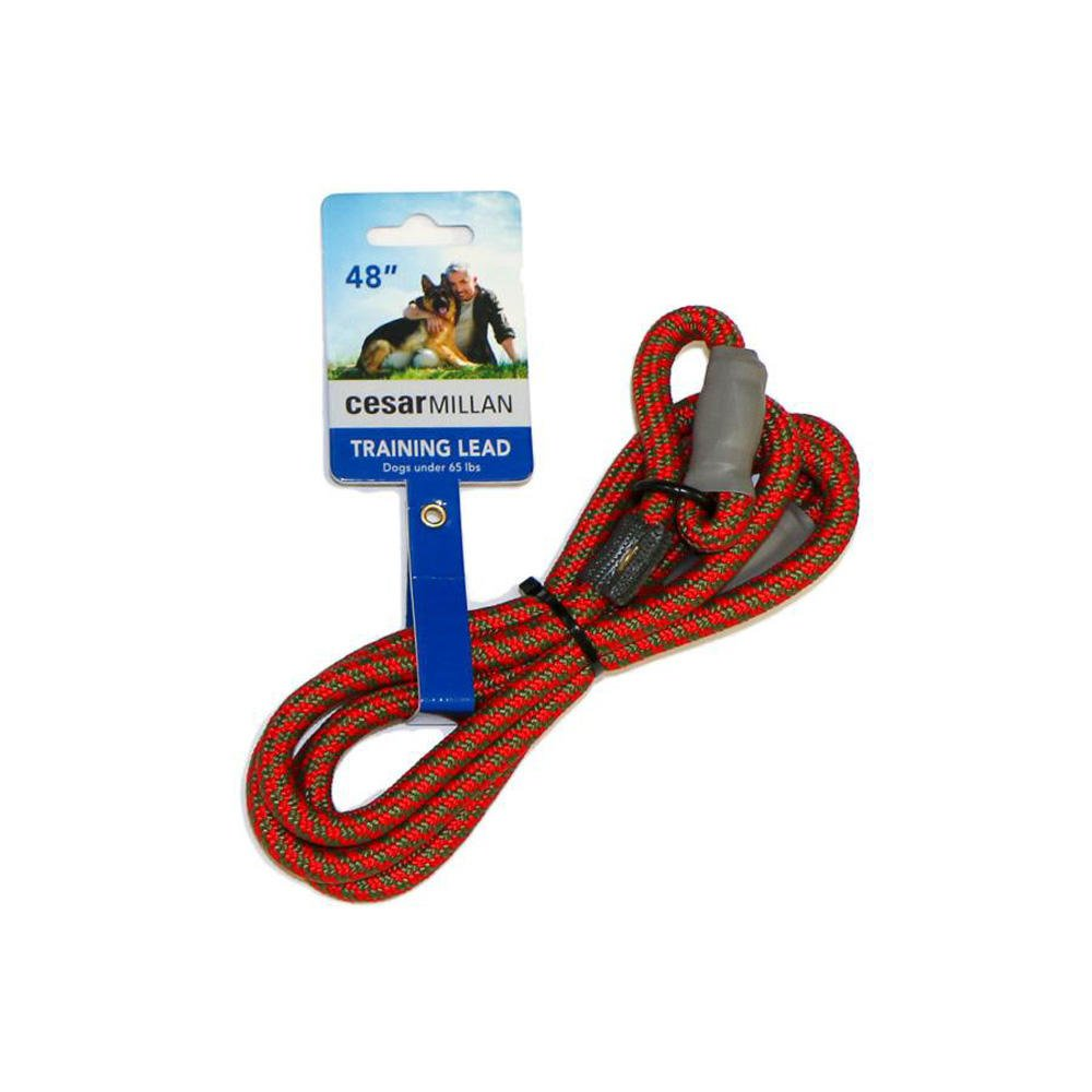 Cesar Millan Slip Lead Leash - Slip Collar Training Lead Gives You Greater Control The Ability to Make Quick Gentle Corrections Aqua/Purple)