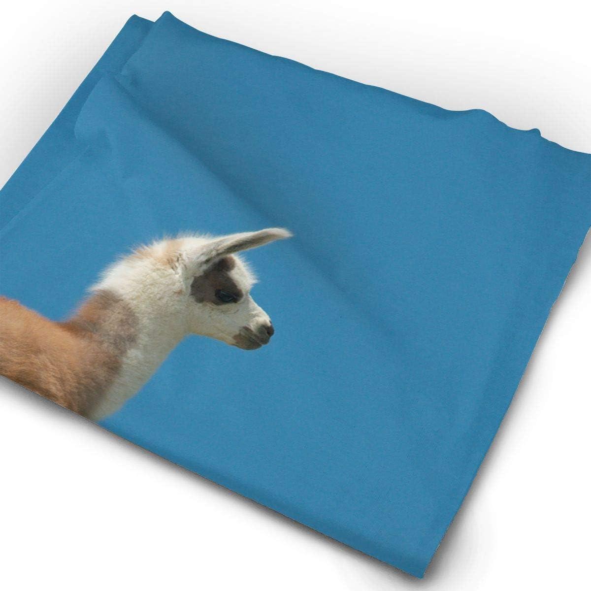 Long Leg Alpaca Unisex Fashion Quick-Drying Microfiber Headdress Outdoor Magic Scarf Neck Neck Scarf Hooded Scarf Super Soft Handle
