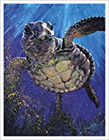 Stephen Fishwick Kemps Ridley Sea Turtle Fine Decorative Animal Art Postcard Poster Print Unframed 11x14