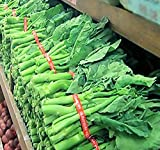 200 x Chinese Broccoli, Kailan Gai Lan Seeds - Most Popular vegetable in Cantonese Cuisine - Approx. 60-65 Days - By MySeeds.Co