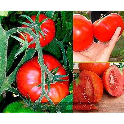 Seeds Organic Heirloom Tomato Cosmonaut Volkov fragant from Ukraine 0.2 Gram : Garden & Outdoor