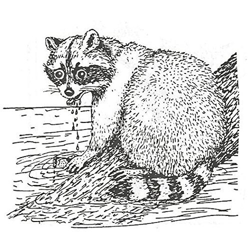 Raccoon Rubber Stamp<br>2 1/2 x 2 Inches
