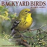 Backyard Birds 2019 Wall Calendar