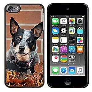 KLONGSHOP // Cubierta de piel con cierre a presión Shell trasero duro de goma Protección Caso - Rata Terrier Toy Fox Pequeño perro de la caída del otoño - Apple iPod Touch 6 6th Touch6 //