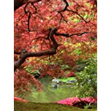 Wall Mural Photo of: Japanese Garden. Full wall mural size: 6-Feet wide by 8-Feet high (1,83m x 2,44m). Prepasted, Dry Strippable, Removable, Reusable, Washable, Easy to hang for a seamless look. Other sizes available.