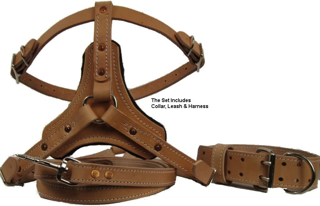 PET DOG COLLAR Stiched Leash Combo Set Dark Brown Leather Bridle Hand Sewn 34 leash 1 Collar Wide Amish Made Stainless Personalized Name