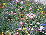 One Pound Wildflower Mix with