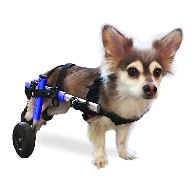 Walkin' Wheels Dog Wheelchair - for Small Dogs 11-25 lbs - Veterinarian  Approved - Wheelchair for Back Legs