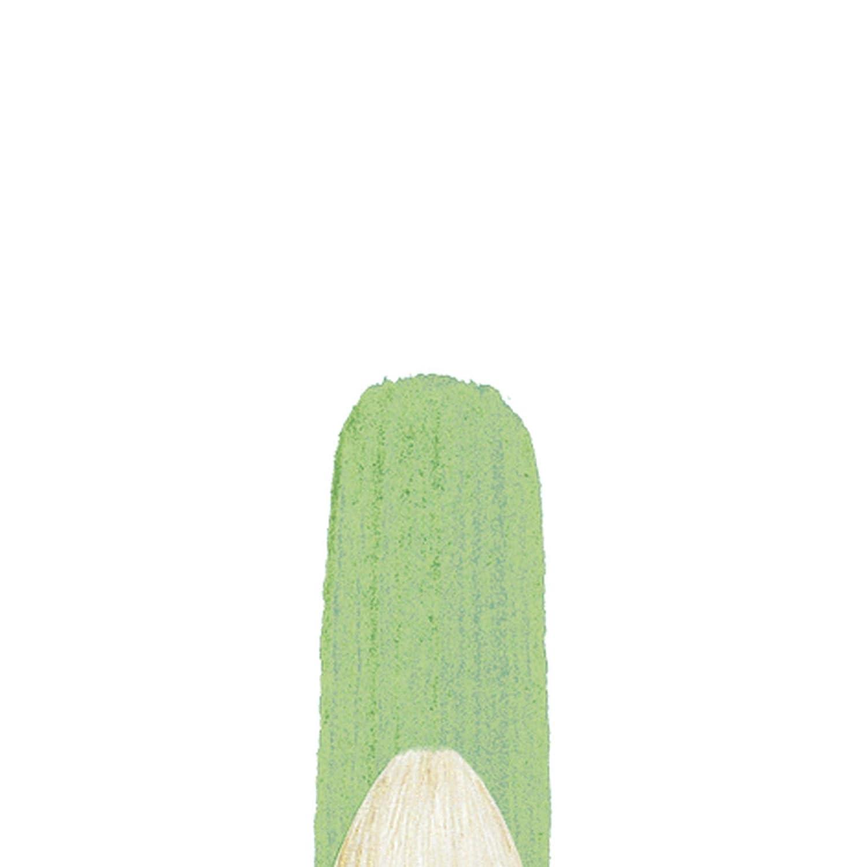 Winsor /& Newton Winton Hog Bristle Brush-Filbert #1 1