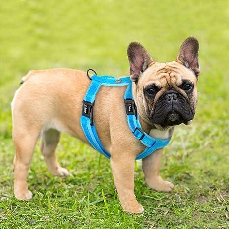 KXTHUT-Collar para mascotas Collar De Perro Ajustable Arnés Para ...