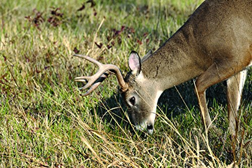Nature's Seed 0.5 Acre Great Plains Big Game Food Plot Blend