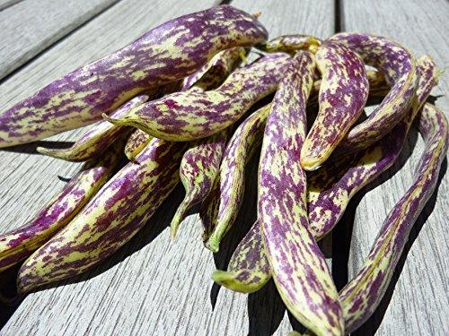 Dragon tongue Bean (1 lb Seeds) Dragon Tongue Beans- a triple purpose bean, (snap bean, green shell, dried bean).