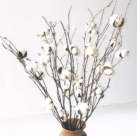Ydfq Flores secas Naturales Ramas de algodón Blanco Algodón Natural Bola de Bolitas Spray de Rama 20-25