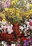 Tropica - fiori selvatici - Nord America - Rocky Mountains (17 tipi) - 1000 semi