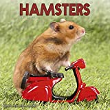 Hamster Calendar - Cute Animal Calendar - Calendars 2019 - 2020 Wall Calendars - Animal Calendar - Hamsters 16 Month Wall Calendar by Avonside