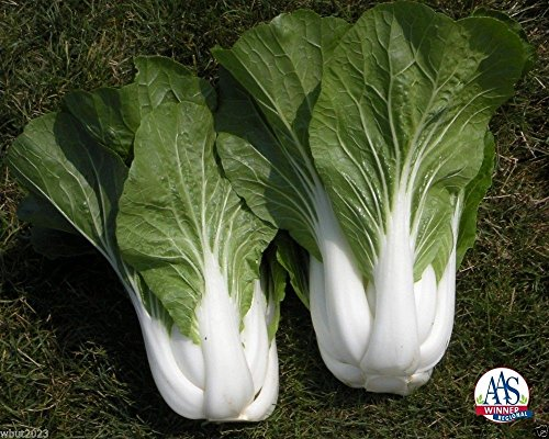 Chinese Cabbage (1000 Seeds) White Pak Choi, Non-heading Leaf Vegetable., Organic