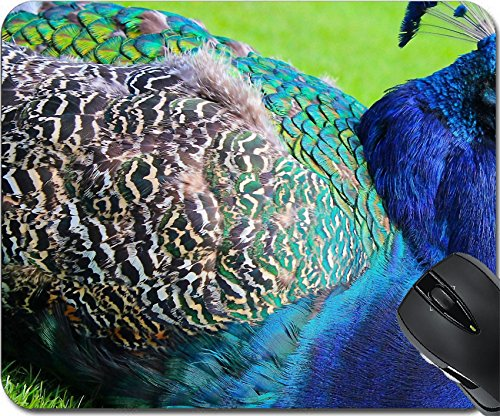 MSD Mousepad Mouse Pads/Mat design 34854602 ll Colorful Blue Peacock at Rest with Green Background at Beacon Hill Park - Vancouver For You Eyes