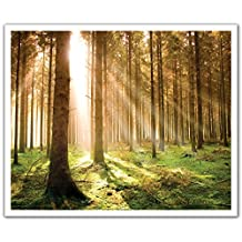J.P. London Peel and Stick Removable Wall Decal Sticker Mural, Forest Trees Morning Rays at Dawn, 24 by 19.75-Inch