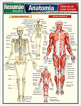 Anatomia. Sistemas do Corpo Humano - 9788577111787