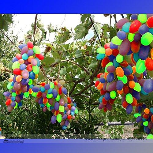 grape seedlings - 4