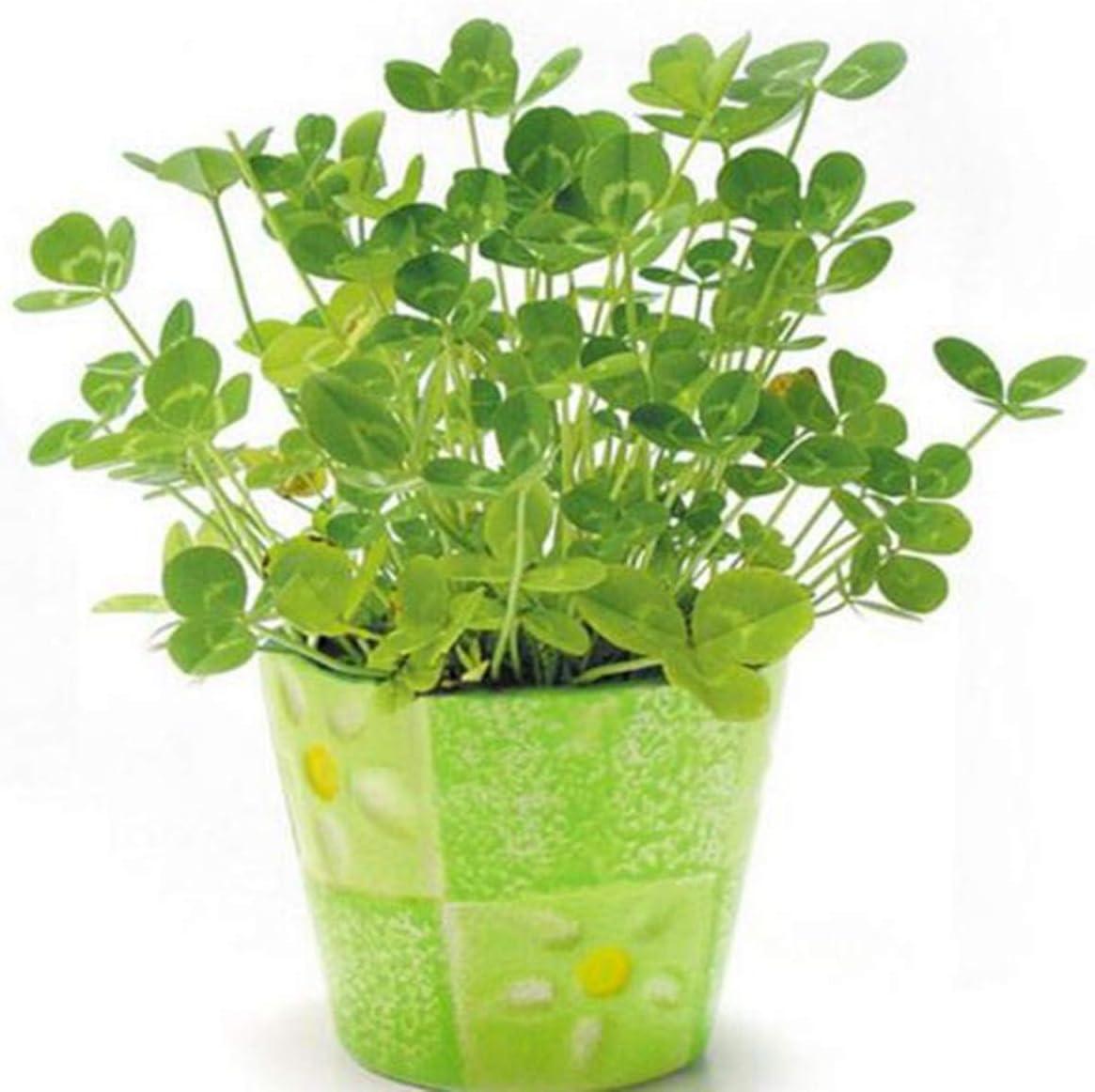 100 Semillas/pack Semillas de trébol de cuatro hojas Balcón Decoración de jardín en macetas Semillas de flores de bonsái