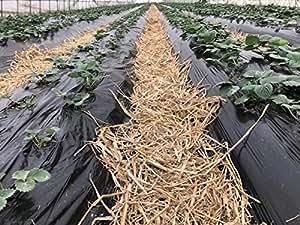 agfabric paisaje jardín película Mantillo de plástico repujado fresa tomate patata Weed Barrera polietileno galga, 6,6x 75ft, Negro