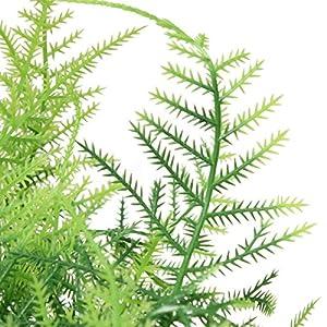 Bazaar Plastic Green 7 Stems Artificial Asparagus Fern Bush Plants Home Cafe Office Decoration 5