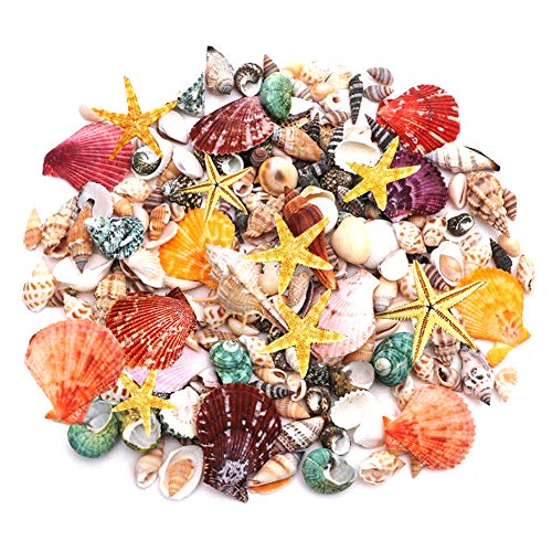 200 PCS Mini Sea Shells Mixed Beach Seashells Starfish, Colorful Natural Seashells Perfect Accent for Candle Making, Home Decoration, Beach Theme Party Wedding Décor, Fish Tank and Vase Filler