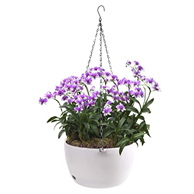 Vencer 11 Inch Round Resin Hanging Basket,Modern Decorative Planter Pot for All House Plants,White,VF-160: Garden & Outdoor