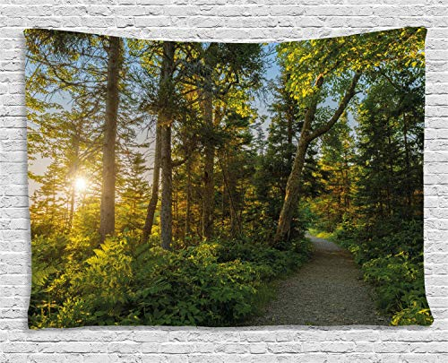 Landscape Tapestry National Park in Cape Breton Highlands Canada Forest Path Trees Tranquility Photo Wall Hangings Tapestries Polyester Fabric Wall Decor 50x60 Inches, Blue Green]()