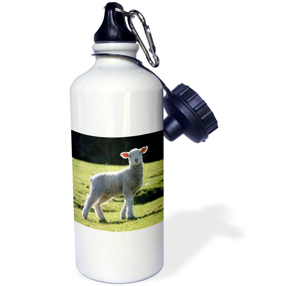 3dRose wb/_22784/_1Adorable Lamb New Zealand Sports Water Bottle White 21 oz