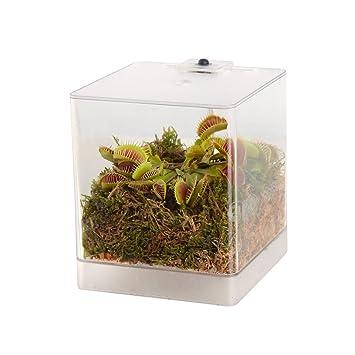 Swampworld Mini Terrarium Led Light Carnivorous Plant Venus