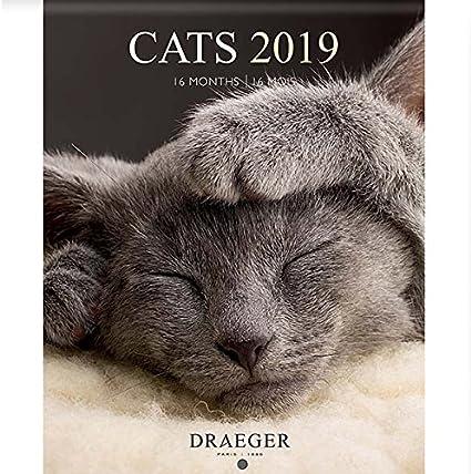 Draeger 79003075 pequeño calendario pared 14 x 18 cm gatos 2019: Amazon.es: Oficina y papelería