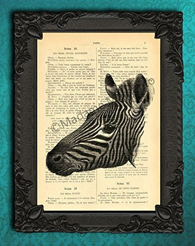 Zebra portrait art print, safari animal artwork on dictionary page, striped zebra head antique upcycled (Old Antique Etching)