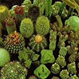 Cactus Mix- 25 Seeds
