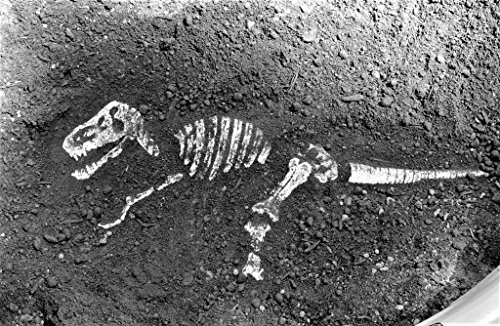 Dinosaur Bones Sand Mold Set (10 Pcs. Set) by Aztec (Image #2)