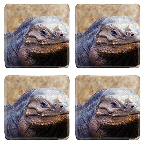 Liili Square Coasters Closeup Of A Lizard Photo 511809