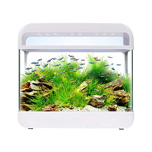 Tanque de cristal pequeño – un acuario que puede alimentar peces y ...