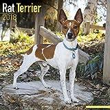 Rat Terrier Calendar 2018 - Dog Breed Calendar - Premium Wall Calendar 2017-2018