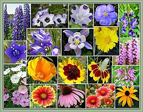 U.S. Native Wildflower Seed Mix - Annuals and Perennials, Sun and Partial Shade