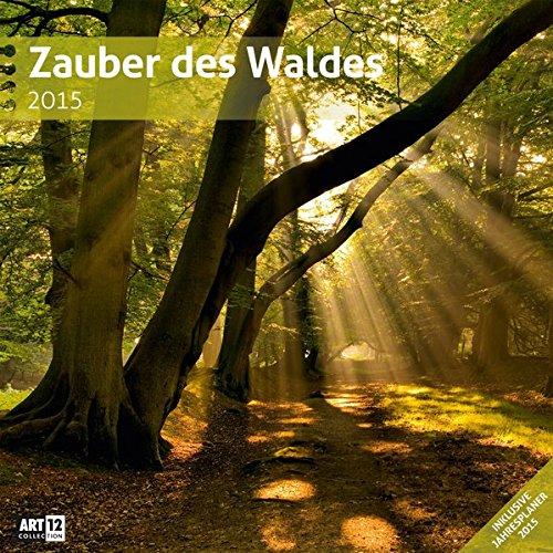 Zauber des Waldes 30 x 30 cm 2015
