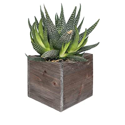 """CYS EXCEL Rustic Cube Planter Box, Wood Planter, Decorative Craft Box, Succulent and Floral Arrangements, Wood Box with Removable Liner H:4"""" Open:4x4: Home & Kitchen"""