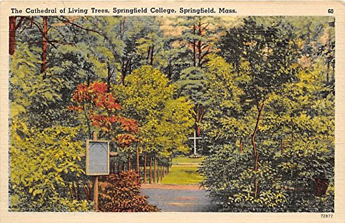 The Cathedral of Living Trees Springfield College Springfield Massachusetts - Tree Springfield